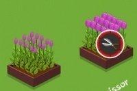 Blumenbeet versorgen