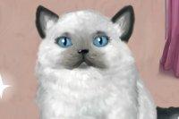 Frau Katze