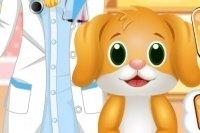 Tierzahnarzt und Doktor