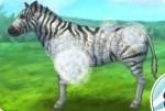 Zebra versorgen